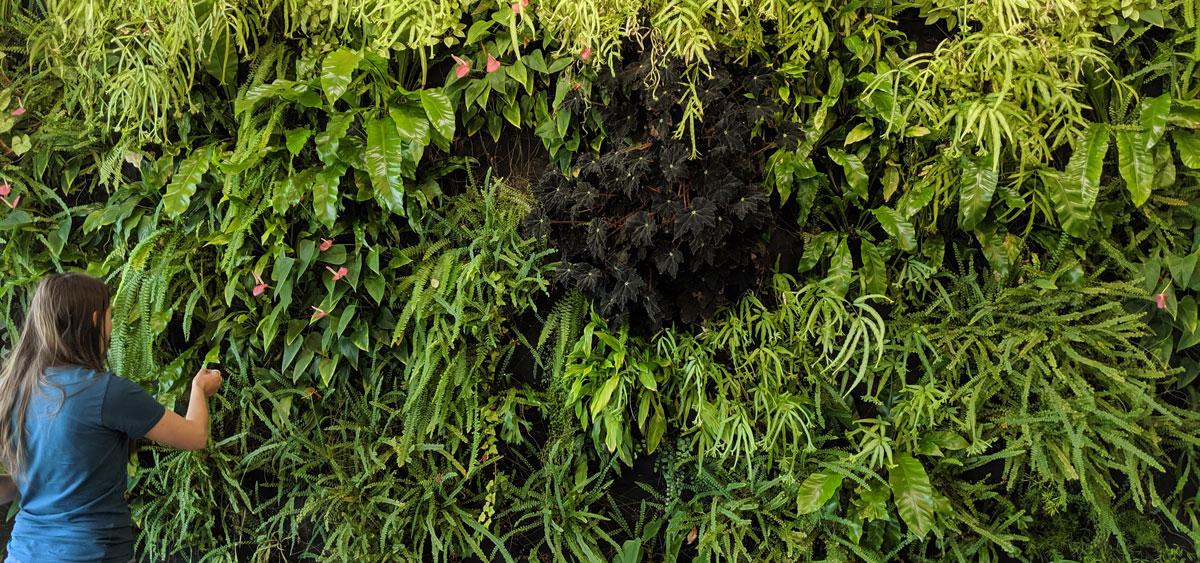 Mur végétal - La ligne verte