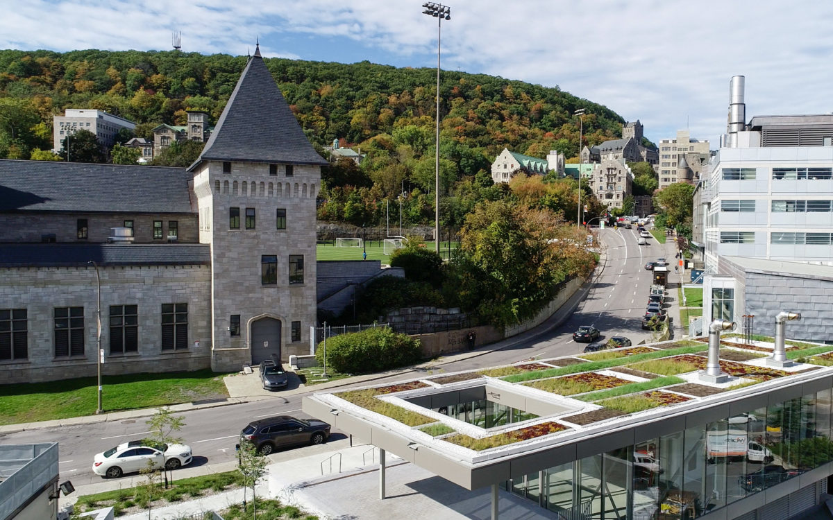 Toit vert - Université McGill - La ligne verte (1)