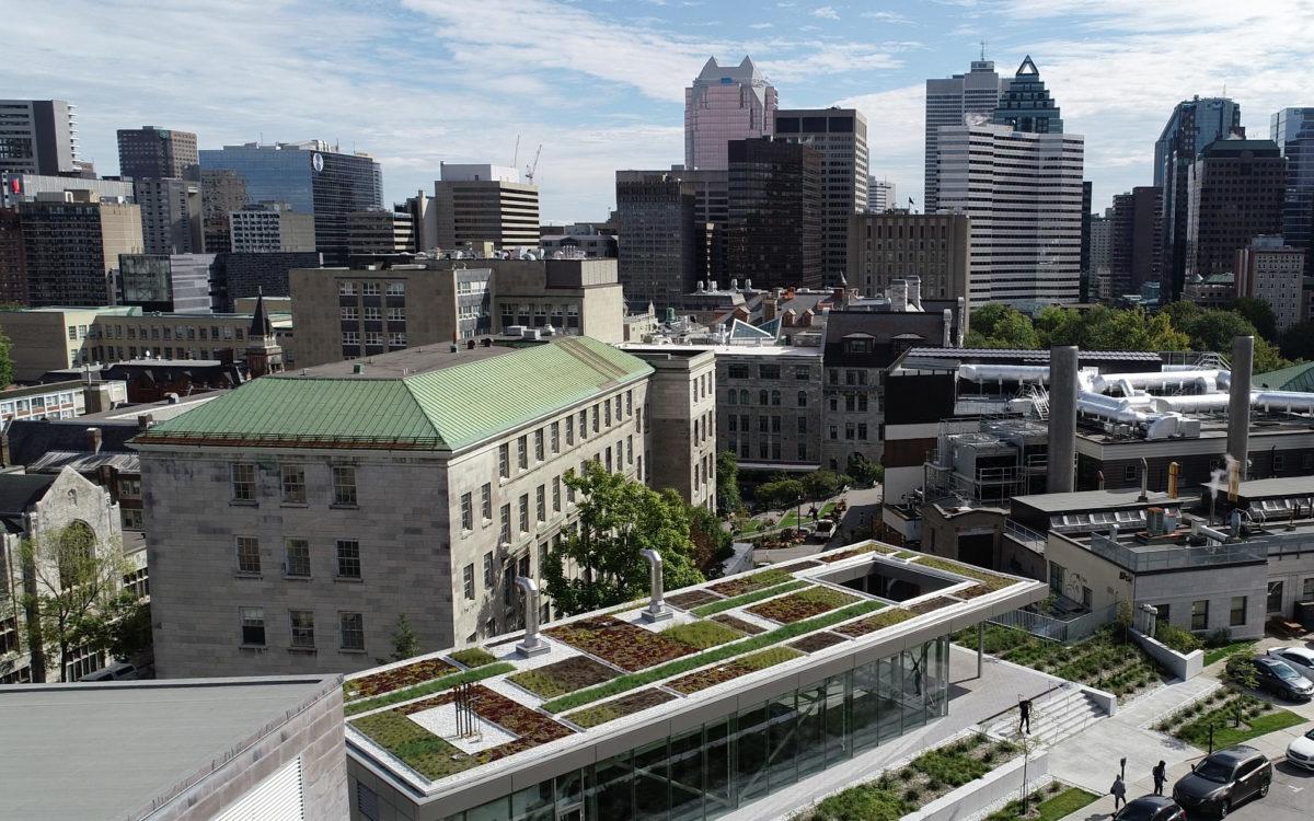 Toit vert - Université McGill - La ligne verte (7)
