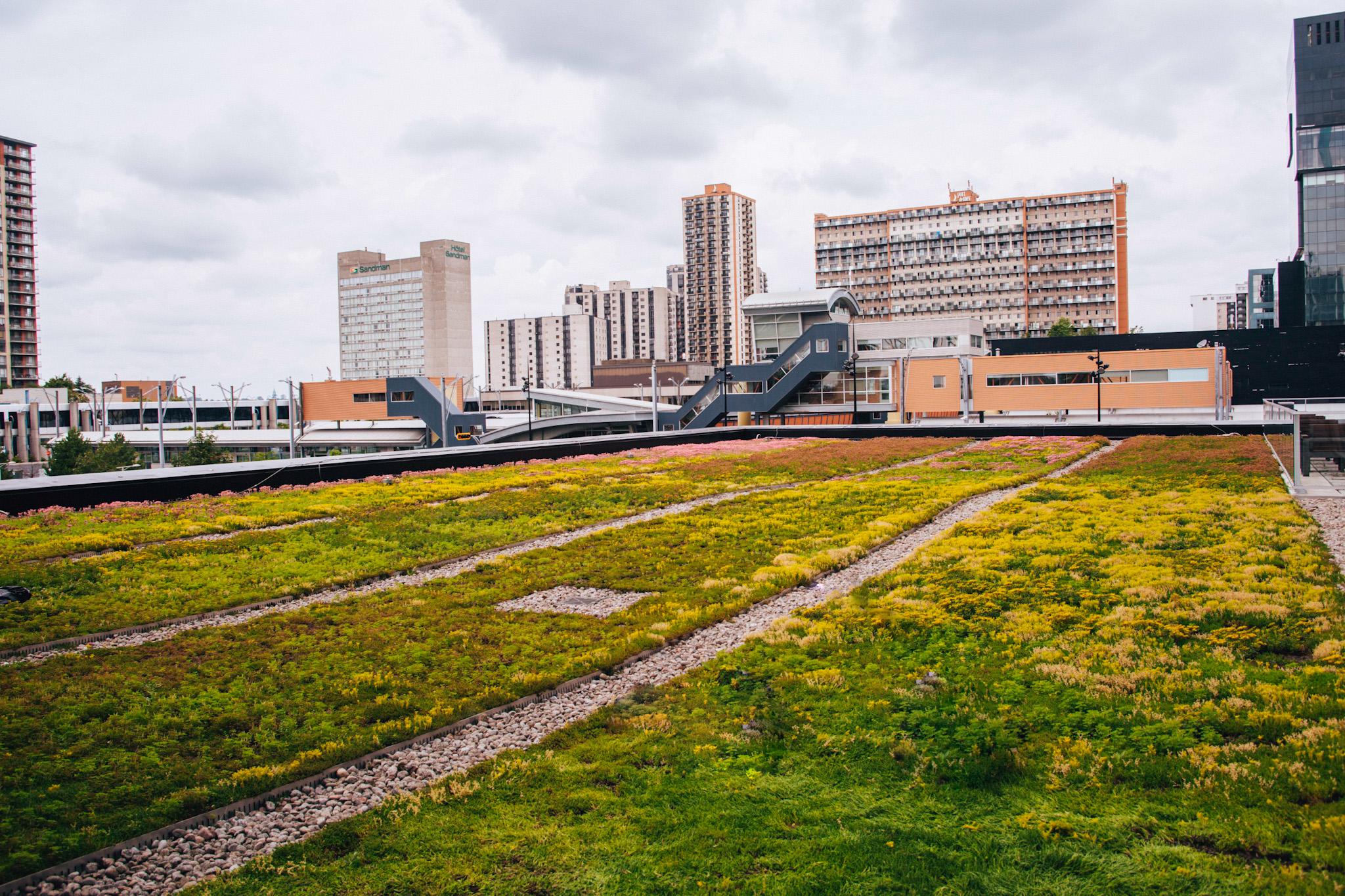 Toiture végétale - toit terrasse - Tour SSQ - Longueuil - La ligne verte (12)
