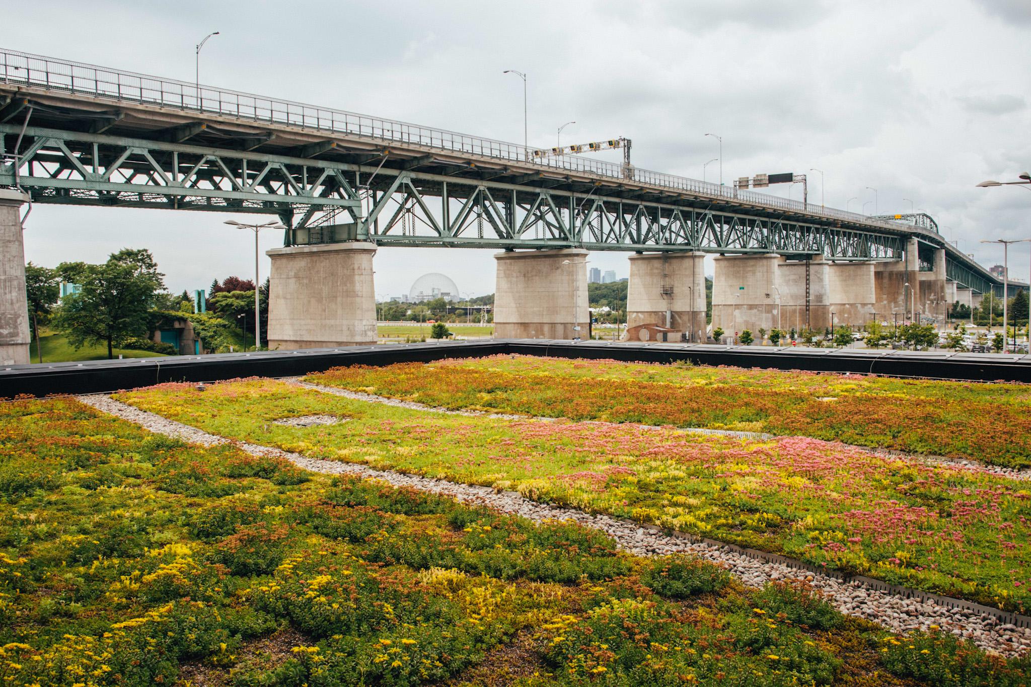 Toiture végétale - toit terrasse - Tour SSQ - Longueuil - La ligne verte (16)